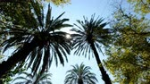 randka : Sun rays seen through the palm leaves. Camera moving foreward on the palm trees street Wideo