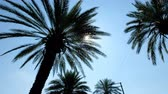 devanear : Sun rays seen through the palm leaves. Camera moving foreward on the palm trees street Stock Footage