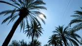 devanear : Sun rays seen through the palm leaves. Camera moving foreward on the palm trees street Vídeos