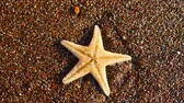 Starfish washed by sea tide on the sand beach closeup view