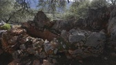 tribu : Ruins of ancient well in forest with mountain on background