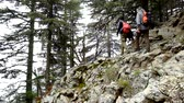 antalya : Hikers walking through the blue pine forest towards the Tahtali mountain peak in Turkey, Antalya province wearing hiker backpacks. Tahtali mountain is 2365m high.