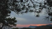 algarve : Beatuful sea view through the pine trees branches at sunset. Paradise place for summer vacation in Mediterranean sea. Stock Footage