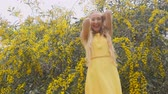 akác : Young beautiful smiling woman with long blond hair in yellow dress in spring Australian Golden wattle trees garden.