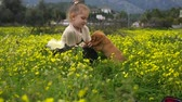 haar : Beautiful caucasian girl sitting in the field with yellow flowers and playing with cocker spaniel puppy
