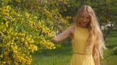 tender : Young beautiful smiling woman with long blond hair in yellow dress enjoying the smell of spring Australian Golden wattle trees garden in slow-motion. Stock Footage