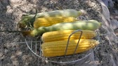 tradicionalmente : Collected clean ears of corn to grill it on metal blazer. Summer chill and farm food concept Vídeos