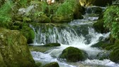 Creek cascade waterfall in mountain forest. Stock Footage