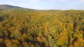 View of colorful beech forest in autumn. Mountain wood and forest from above.