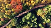 Colorful forest from above in autumn. view of fall colors of european wood and rural road. Fly over trees. Stock Footage