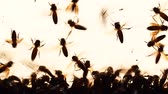 anténa : group of bees flying against glass wall