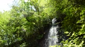 A sunny summer forest, The sun that passed through the trees illuminates the falls that slide down the rocks.