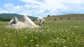 ethno : Camel in green grass with flowers