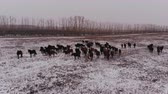 запустить : Horses in the winter landscape.
