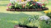 blooming : Landscaped flower garden with lots of colorful blooms on summer, HD vdo.