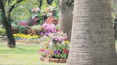 botany : Landscaped flower garden with lots of colorful blooms on summer, HD vdo.