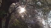 trough : Sun Flare Trough Branches, Nature, Beautiful, Trees, Tilt Stock Footage