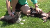 domestic : Animal Lover Petting Cat And Dog, Outdoor, Nature, Puppy, Kitty, Close Up