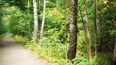 hiking trail : Road in forest with approaching people