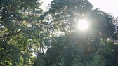 корона : Sun rays shining through trees ,nature background