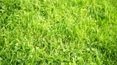 mowed : Blurred grass background smoothly turning into sharpness Stock Footage
