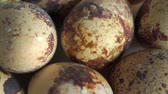 hard boiled eggs : Macro dolly shot of quail eggs, shallow focus Stock Footage