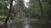 drench : Tropical stream in the jungle