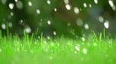 lawn : Green grass and falling drops of water, shallow focus. Super slow motion video, 250 fps