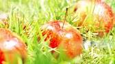 umidade : Pouring water on red apples on the grass, slow motion shot