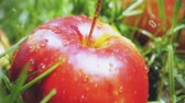 borrifar : Slow motion shot of water drops falling onto red apple