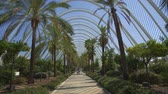 Steadicam walk along palm trees alley on a sunny summer day 무비클립