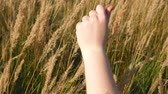 manicura : Hand sways spikelets of plants