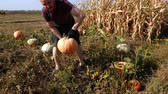 A man collects pumpkins in a field. Sunny day. Work with hands.
