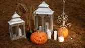 Horrible pumpkins and candles in the coniferous forest. Halloween concept