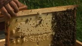 нектар : Bees in the hive