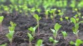 semear : Small green sprouts from the ground up Stock Footage