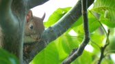 olhos castanhos : Wild young squirrel sitting on a tree branch in summer forest