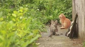 irmãs : Two small kittens are playing with each other at in the garden