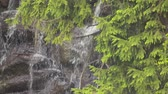 Mountain river water fall on the rocks Wideo