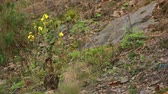 Yellow flower growing between the stones
