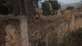 calçada : A stone fence along the farm territory. Stock Footage
