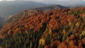 ウッズ : Aerial view of beautiful autumn forest 4k