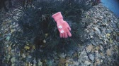 kidnap : Kids glove found on bush in park, evidence confirming kidnapping of little girl