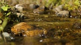 odloučený : Tiny rivulet streaming down over stones, water cleanness and untouched nature