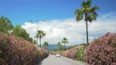 astarlı : Vehicle moving on highway of resort city lined up with blossoming bushes, summer