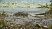 leading : Polluted water splashing on shore, danger to health, environmental disaster