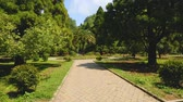 uzanmış : High trees of botanical garden in Batumi, green landmarks, ecological tourism
