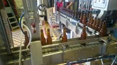 cervejaria : Beer bottles sorted on conveyor belt at alcoholic beverage factory, production Vídeos