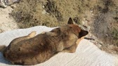 депрессия : Stray dog lying on stone over steep slope, people passing by and taking pictures Стоковые видеозаписи