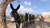 средство : Riding donkeys standing one after another in line, animals as means of transport Стоковые видеозаписи